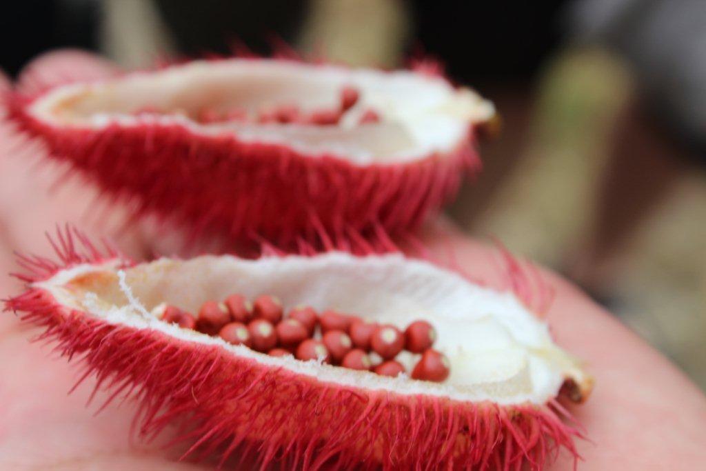 Fruit dont les graines servent de colorant