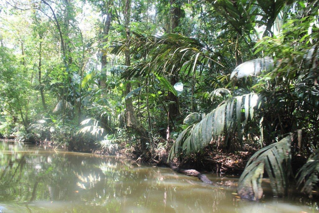 la jungle en forêt équatoriale humide