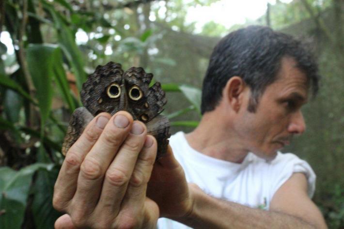 Le papillon Hibou