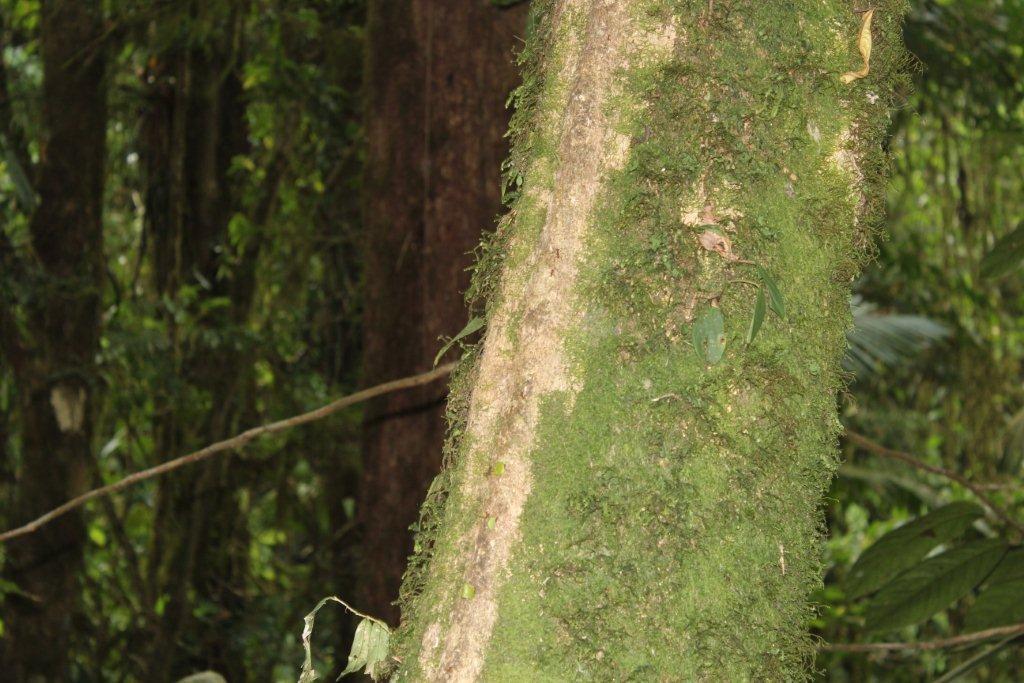 Passage des fourmis sur un tronc