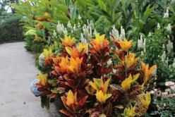 Flore luxuriante en forêt équatoriale humide