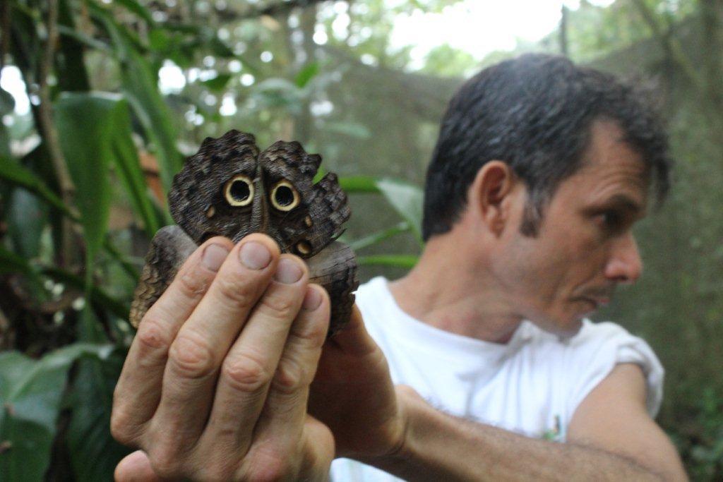 Un papillon hibou
